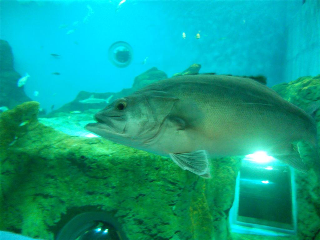 acuario_12 (Large)
