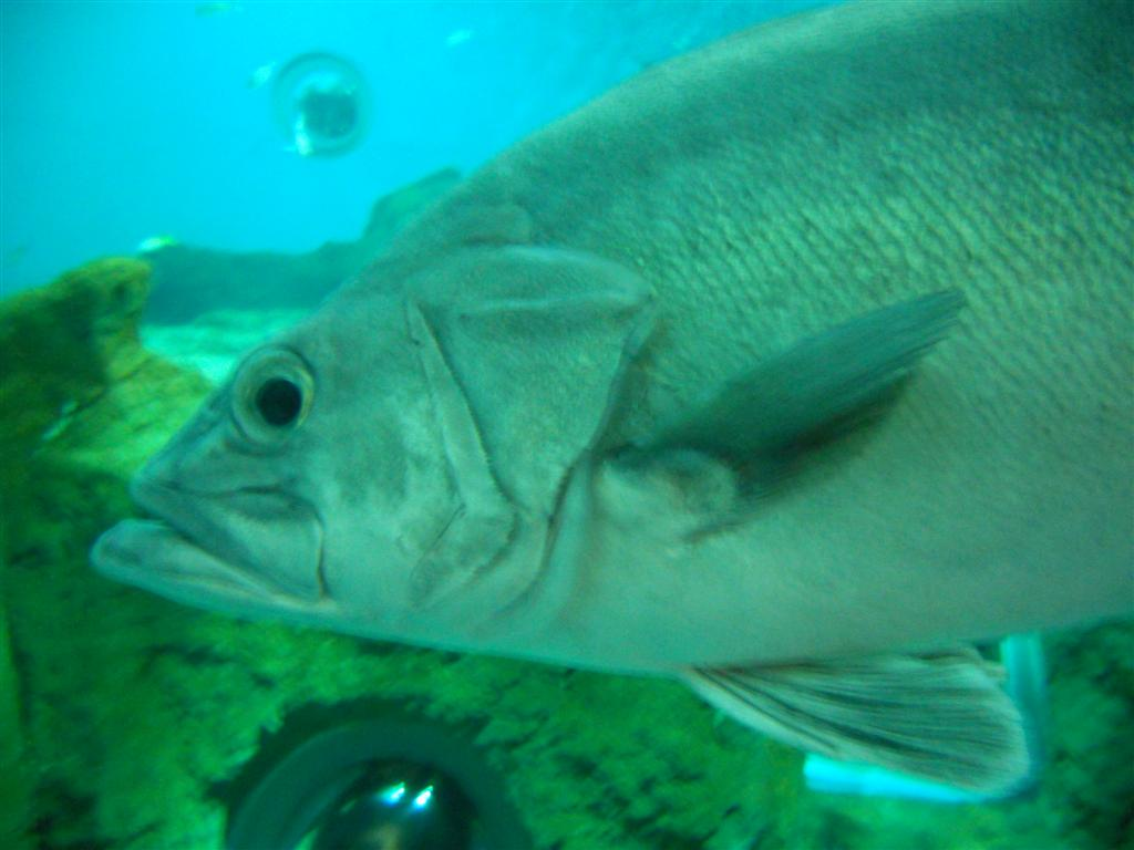 acuario_13 (Large)
