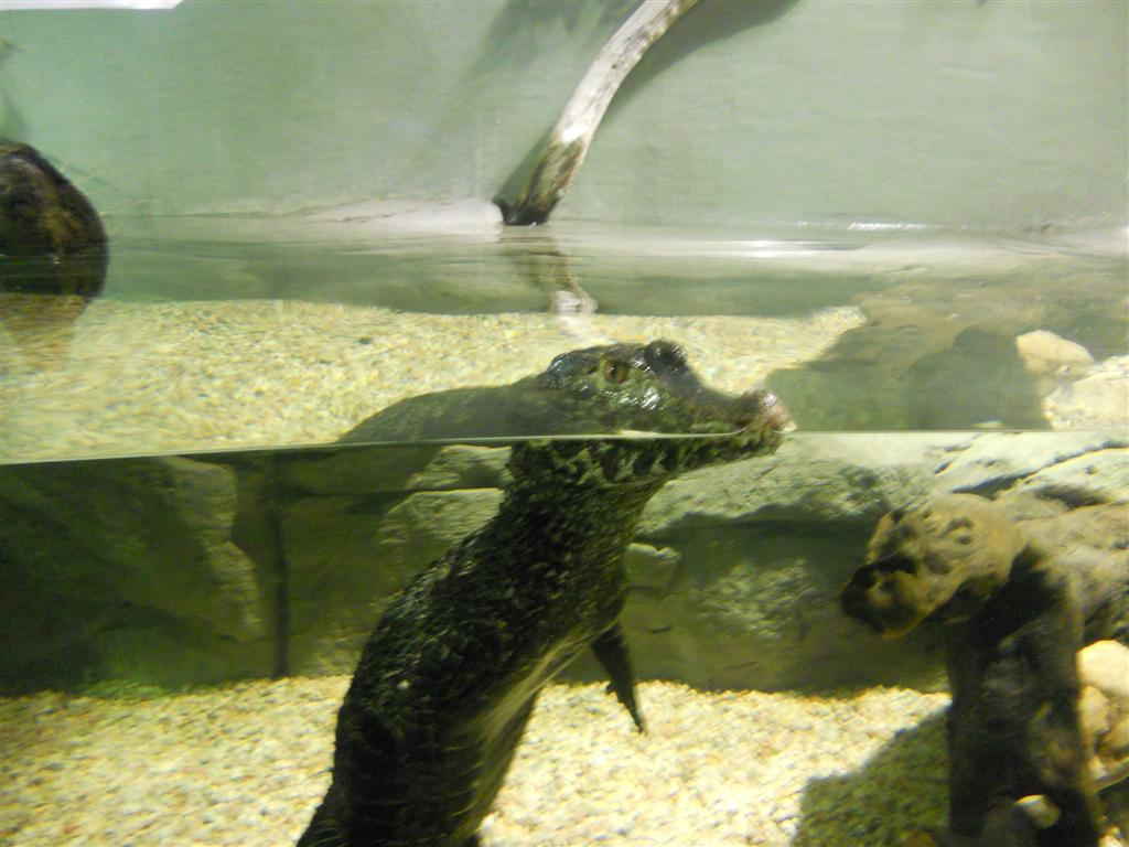 acuario_16 (Large)