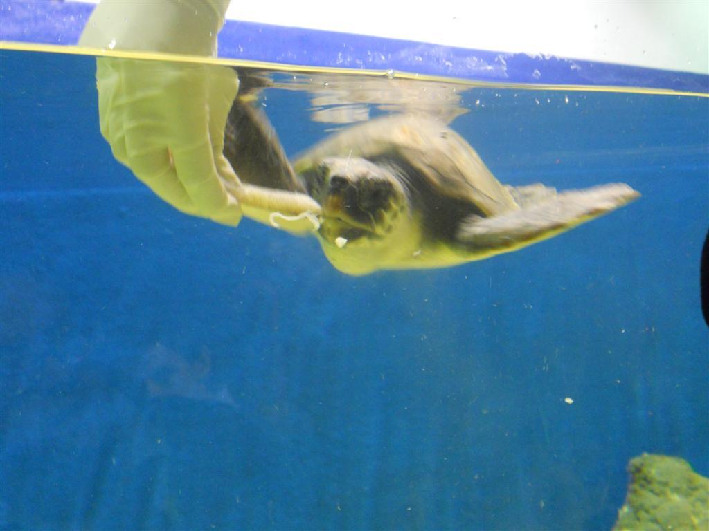 acuario_17 (Large)