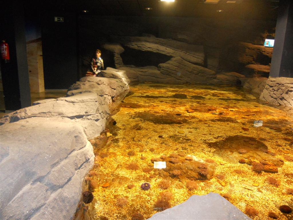 acuario_5 (Large)