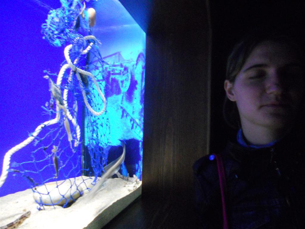 acuario_8 (Large)